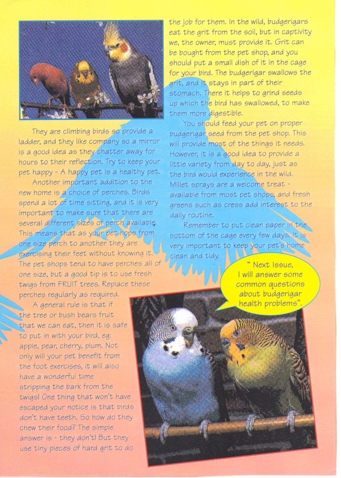 """Pet Tails"" Budgie Feature"