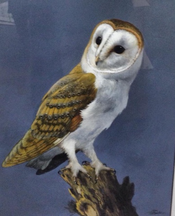 Barn Owl by Bill Titcombe