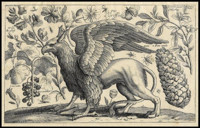 A Griffin as visualised by 17th century German artist Wenceslaus Hollar