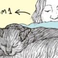 Ilana Zeffren's Urban Tails - Promo