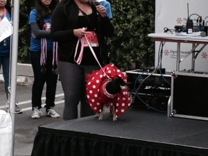 4 12 minnie mouse dog winner