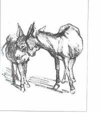 English: Two donkeys Deutsch: Zwei Esel