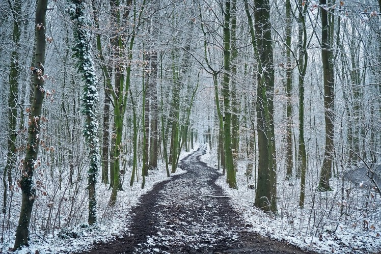A picture of a trail running through the forest in winter.