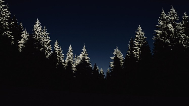 A picture of a pine forest at night.