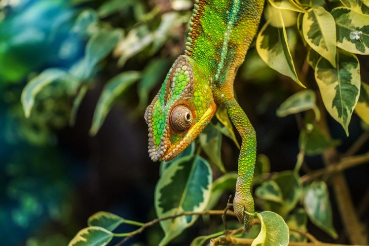 lizard in a rainforest