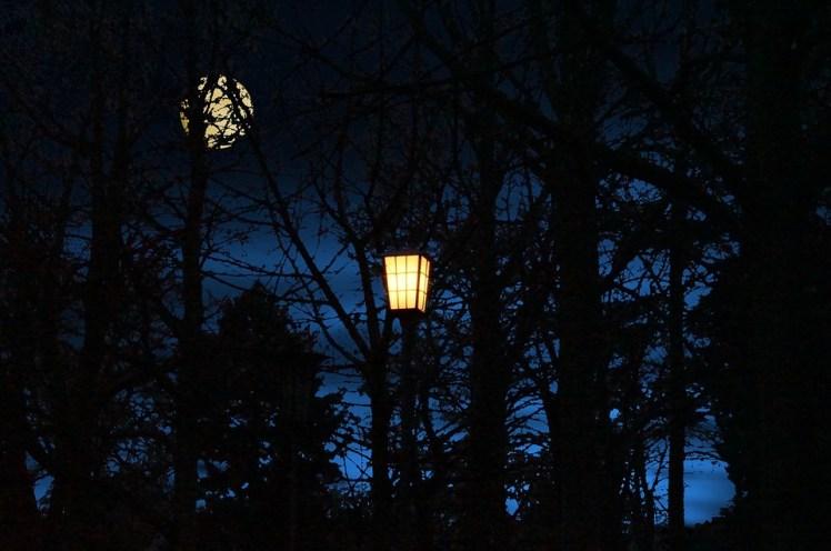 An street light on a dark night.