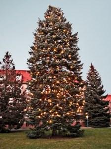Christmas, true, false, wonder, belief