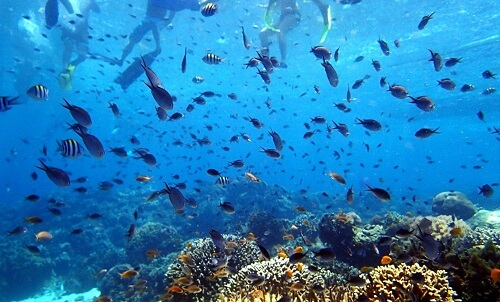 Snorkelen bij Hilutungan Island - Cebu, Central Visayas, Filipijnen