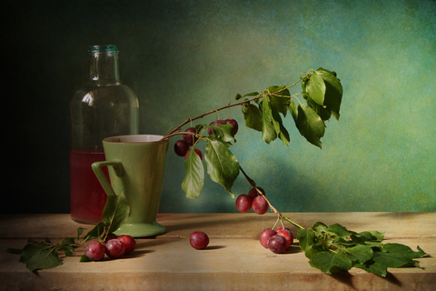 olive plant and oil