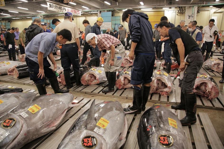 Inside Tokyo's world famous Tsukiji Market Fish Market | dp@large