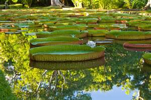 Sir Seewoosagur Ramgoolan Botanic Garden