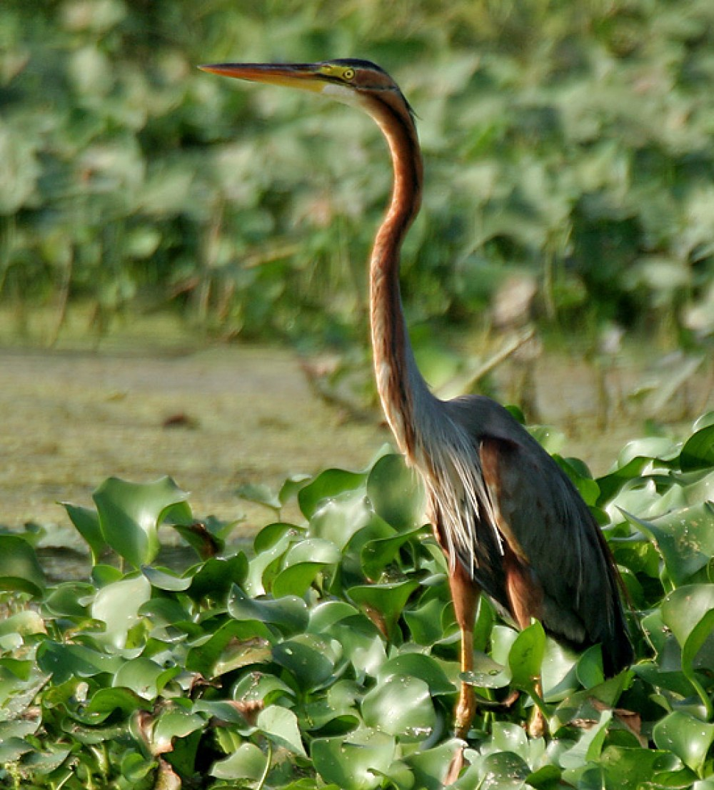 Koundinya Wildlife Sanctuary