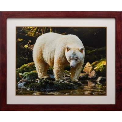 Jeff Lane -- Spirit Bear