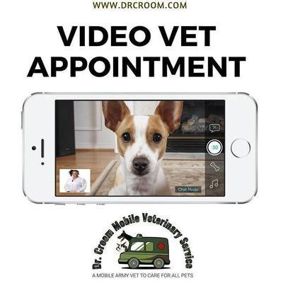Video Veterinary Appointment, 1 Pet (For CURRENT CLIENT)--20 minutes