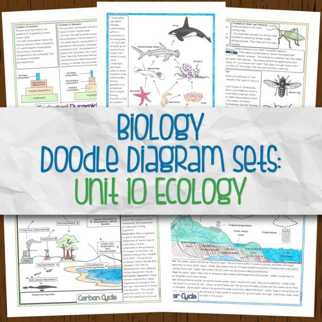 Biology Unit 10 Doodle Diagram Sets for Ecology