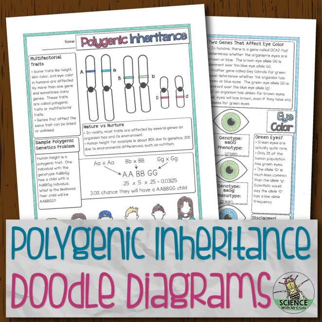 Polygenic Inheritence Doodle Diagrams
