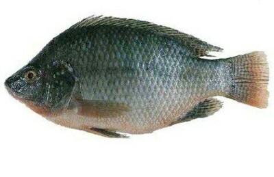 አሳ Fish
