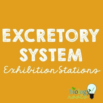 Excretory System Exhibition Stations Bundle