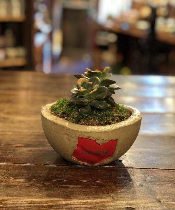 Large 'Ohio HOME' succulent
