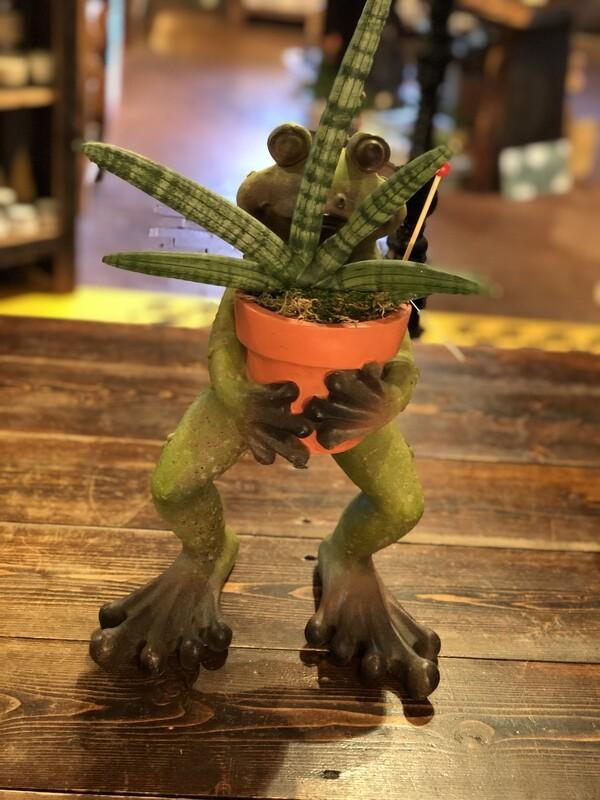 'Sun Sparks for Spring' Frog Planter