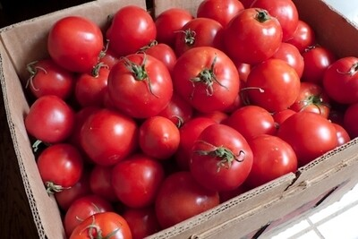 Tomato 20lb Box (round slicers)