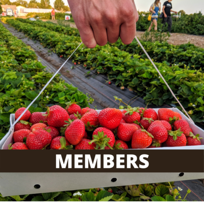 Pick-Your-Own Strawberry Basket (Currently Members Only)