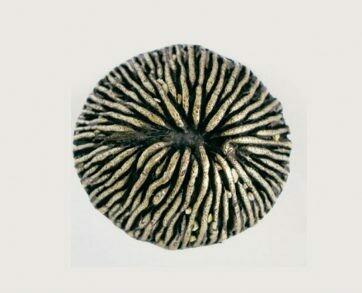 Emenee Decorative Cabinet Hardware Mushroom Coral 1-1/2