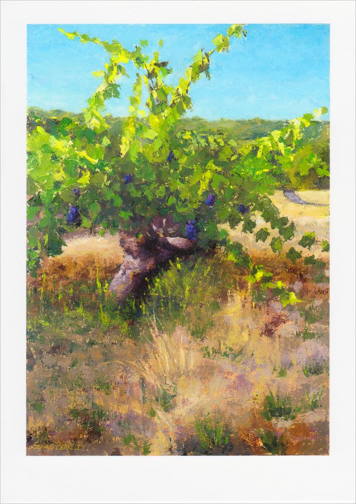 'Sonoma Vineyard' Notecard