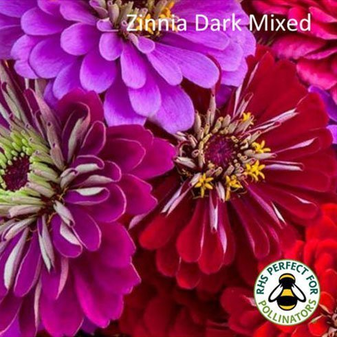 Zinnia Mixed Dark