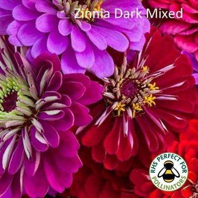 Dark Zinnia Mix