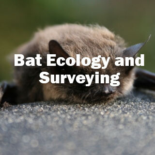 Bat Ecology and Surveying (Exeter): 15th & 16th May 2020 CANCELLED - new date in Autumn
