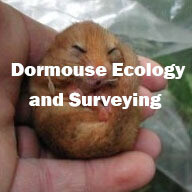 Dormouse Ecology and Surveying (Surrey): 17th September 2020
