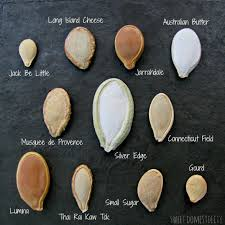 Types of various pumpkin plant seeds