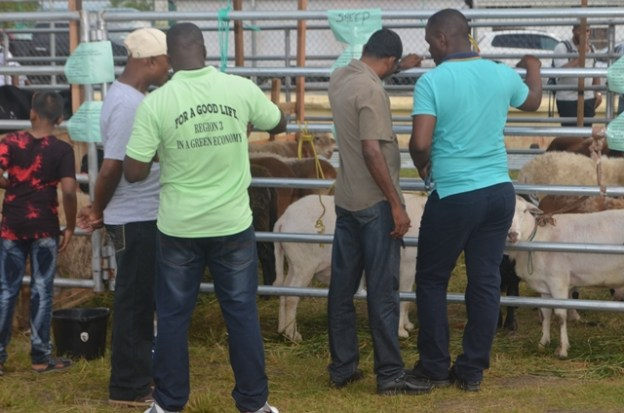 Patrons views some of the local breed livestock