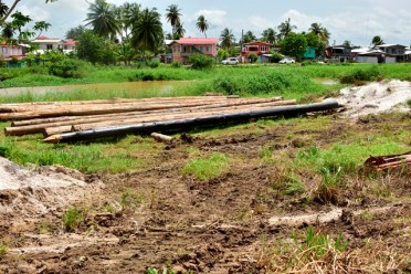 Timber piles for construction of a sluice in the West Berbice area.
