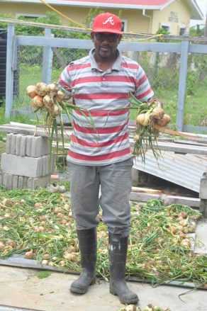 A farmer proudly displays the harvested onions