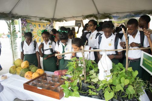 Students engaging in the Agriculture Open Day Exhibition