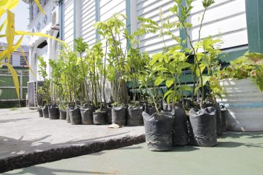 The many plants that were distributed