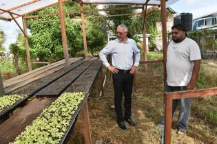 Farmer Rahamat showing Minister Gaskin some of his seedlings in a Shade house.