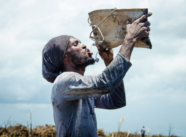This cane-cutter demonstrates the use of the Canvas water pouch that is exclusive to GuySuCo and its field workers.