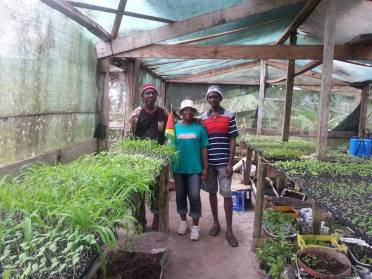 The seedling producers, from (left) Oliver Tappin, (centre) colleague Wonda Richmond and (right) Cleveland Tappin.