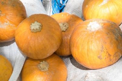 Organic pumpkins being displayed for sale.