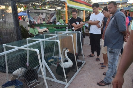 Patrons viewing some of the birds on display.