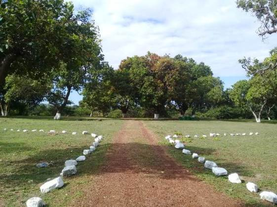 A recently cleared and restored Cashew Grove Park