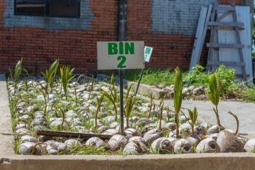 Bin 2 – Coconuts