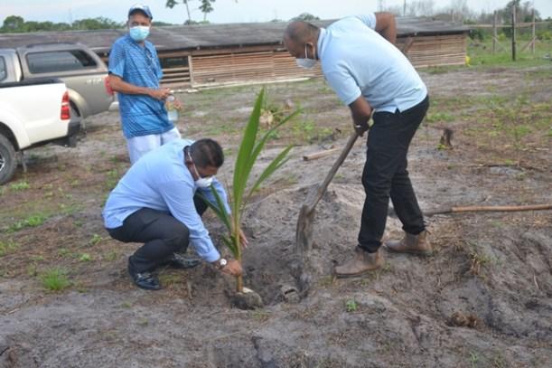 Minister of Agriculture, Hon. Zulfikar Mustapha and CARDI's Jhaman Kundun plant a coconut tree at the at the William Adams Farm at Dalgin, Soesdyke-Linden Highway.