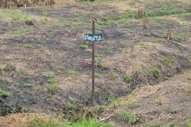 Land and sugar cane destroyed by squatters