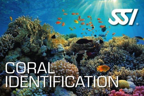 Coral ID Ecology Program