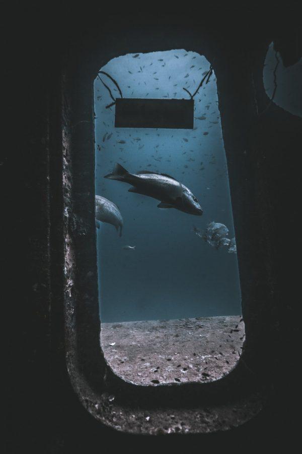 diving in sattakut shipwreck koh tao