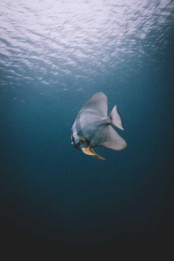 marine life in koh tao